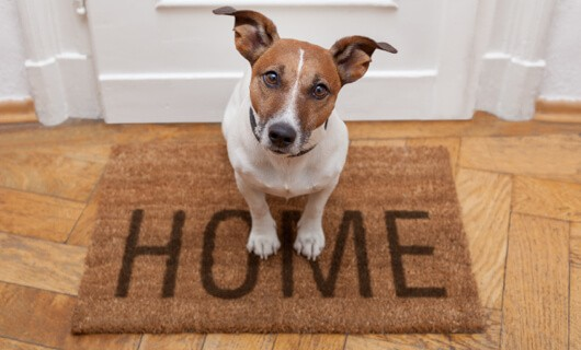 Dog on Door mat | All Floors Design Centre